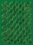 Obal LEGION Standard 50ks - New Dragon Hide - Green