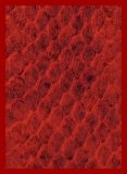 Obal LEGION Standard 50ks - New Dragon Hide - Red